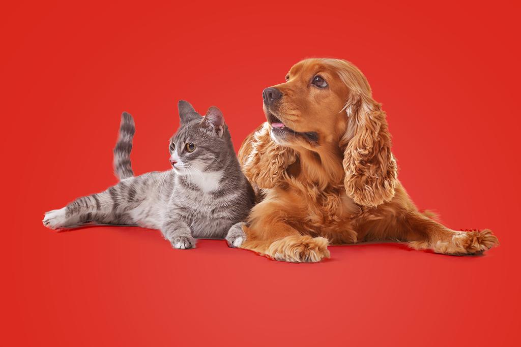 Evcil Hayvan Bakımı Nasıl Olmalı?