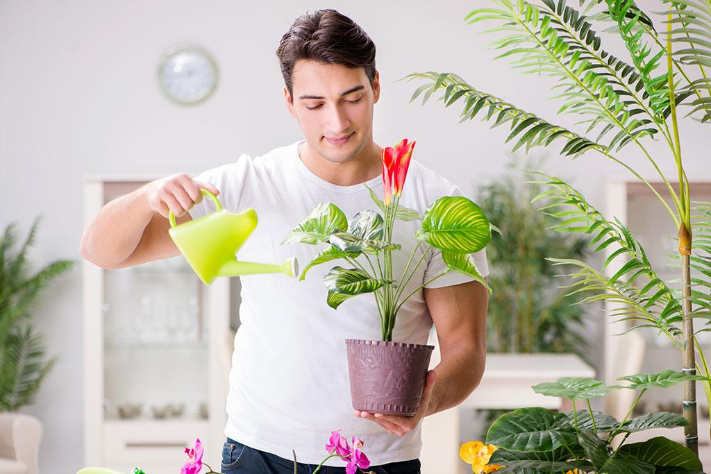 Evde Bitki Bakımının Püf Noktaları